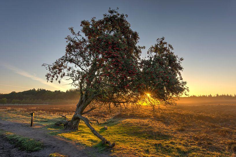 Lijsterbes boom van Fotografie Ronald