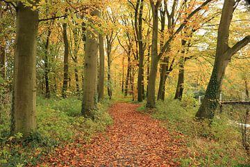 Wald von Schloss ter Hooge von Wendy Hilberath