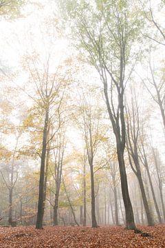 Beukenbos in de mist van Geert Brosens