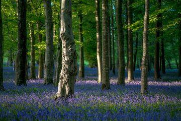 Baumstamm in den Waldblumenwald von Roelof Nijholt