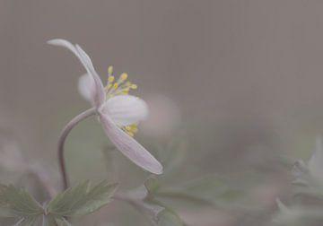 Spring delight van