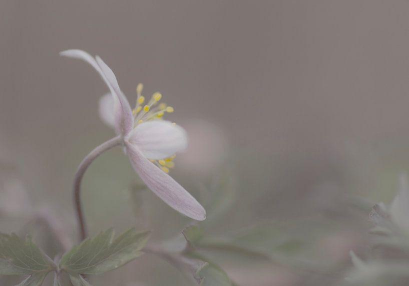 Spring delight van Birgitte Bergman