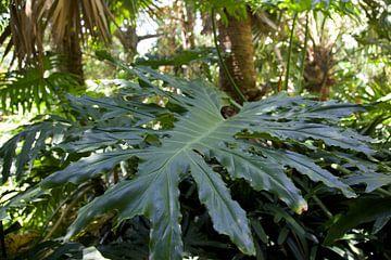 Tapete - Tropisch 10 von Veerle Van den Langenbergh