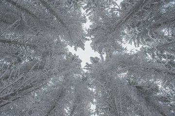 Bomen in de sneeuw sur Richard van der Hoek