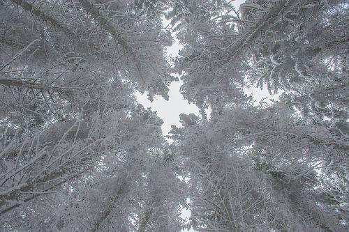 Bomen in de sneeuw van