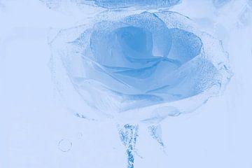 Roos in blauw van Marc Heiligenstein