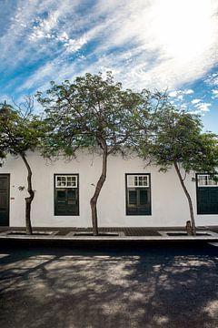 Drei Bäume und drei Fenster von Pictorine
