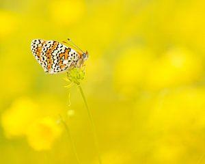 Vlinder en boterbloemen / Butterfly in buttercup field van Elles Rijsdijk