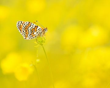 Vlinder en boterbloemen / Butterfly in buttercup field von Elles Rijsdijk