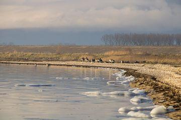 Natuurgebied water en vogels van Sharona de Wolf