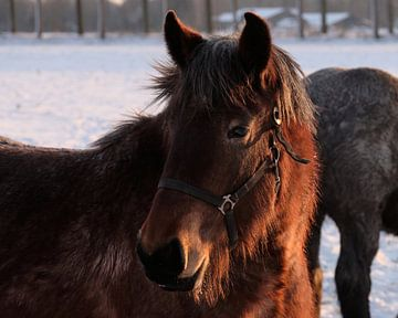 Paard van Jan Kooreman