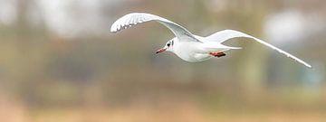 De  vleugels van mijn vlucht van Fotografie Jeronimo