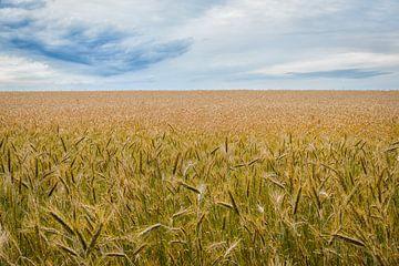 Das Weizenfeld von Johan Vanbockryck
