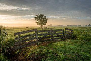 Polderlandschaft mit Zaun im grünen Herzen von Jasper Suijten