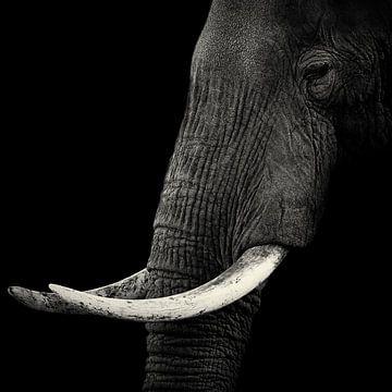 Elephant profiel, Hannes Bertsch