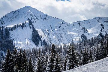 Landschap met besneeuwde bergen en naaldbomen van