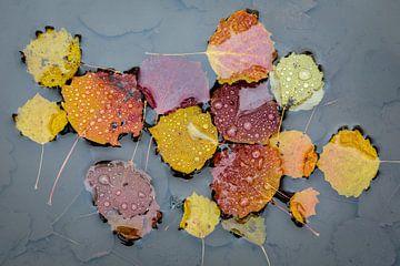Drijvende herfstblaadjes van Michel Lucas