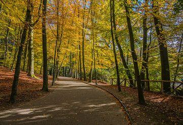 Park Sonsbeek von Jeroen de Jongh