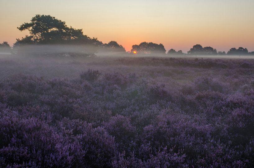 Drenthe Moor, Exloo von Rene Mensen