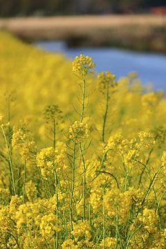 Gelbe Frühlingsblumen von Bobsphotography