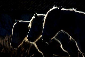Paarden (gekleurde versie), Michel Romaggi van 1x