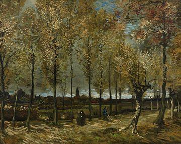 Populierenlaan bij Nuenen -  Vincent van Gogh