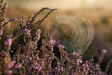 Magisches Sonnenaufgang-Spinnennetz in den Blumen von Dorota Talady