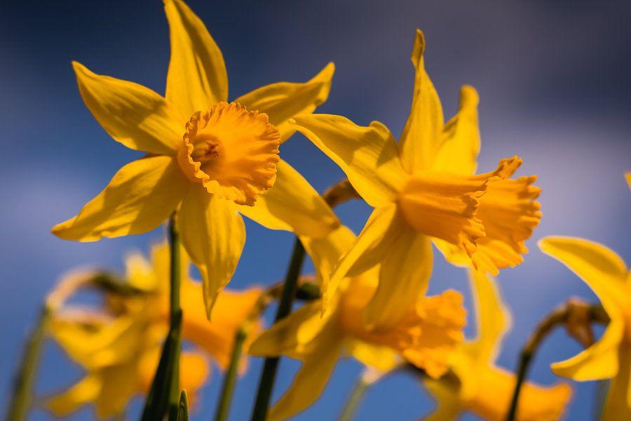 De lente op zijn mooist