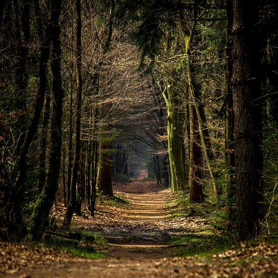 Bospad in de herfst (Holland)