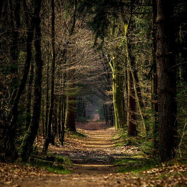 Bospad in de herfst (Holland) van ErikJan Braakman