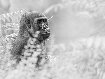 Gorilla in de struiken van Scholtes Fotografie