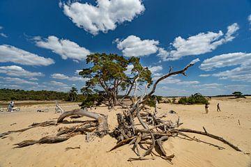 Sommer im Nationalpark De Hoge Veluwe von Laurens Kleine