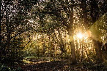 zonsondergang in het Bos van Linsey Aandewiel-Marijnen