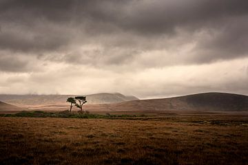 Einsamer Baum im Moorland von Irland von Bo Scheeringa