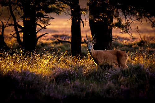 laatste licht in het bos