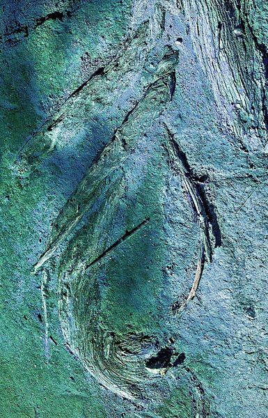 Druppel van een wortel van Sigrid Klop