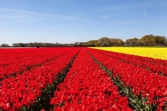 Tulpenveld van DuFrank Images