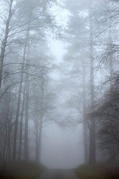 Mist in het Nunspeetse bos van Jenco van Zalk