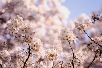 Blühende Bäume in Amstelveen von Joyce van Galen
