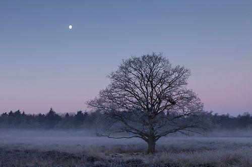 Bevroren eik onder de maan van