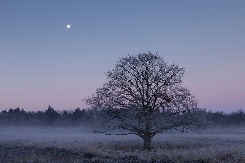 Bevroren eik onder de maan van Karla Leeftink
