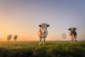 Vaches au lever du soleil | Paysage hollandais | Symétrie sur Marijn Alons