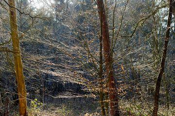 Ragfijn bos