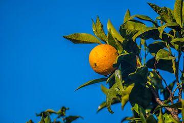 sinaasappel met blauwe lucht van Fred Leeflang