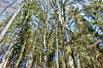 Bäume im Höllbachtal von Roith Fotografie