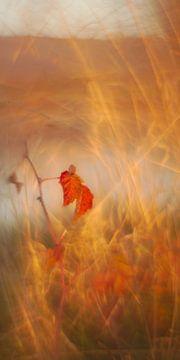 leuchtend rote Blätter von Steffi Hommel