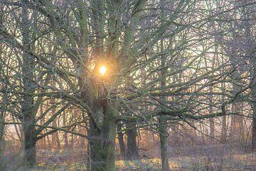 stralende boom van Tania Perneel