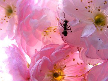 Roze bloesem. von Joke Schippers