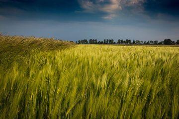 Getreidefeld von Frank Bison