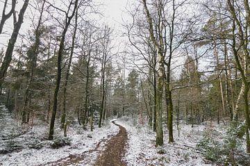 Chemin à travers la forêt d'hiver sur Patrick Verhoef